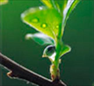 Базальтовая вата Rockwool - экологична